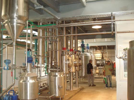 Processing and production of licorice extract